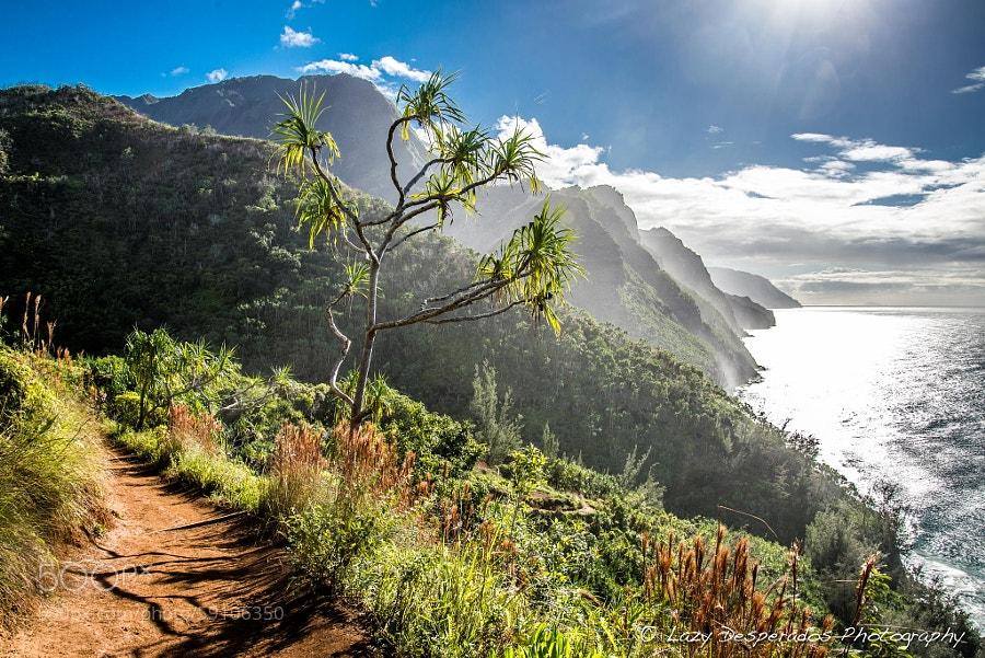 Photograph Coastline Journey by Lazy Desperados  on 500px