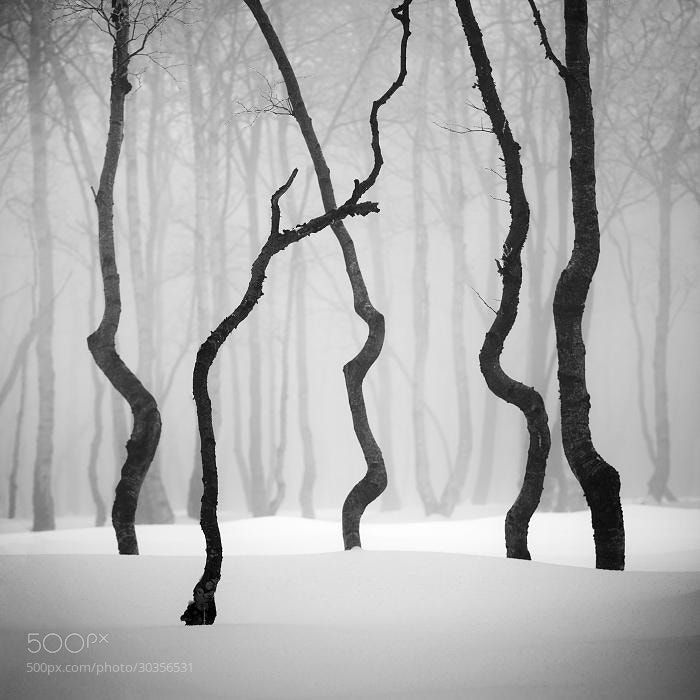 Photograph Winter in the Ore mountains II by Daniel ?e?icha on 500px