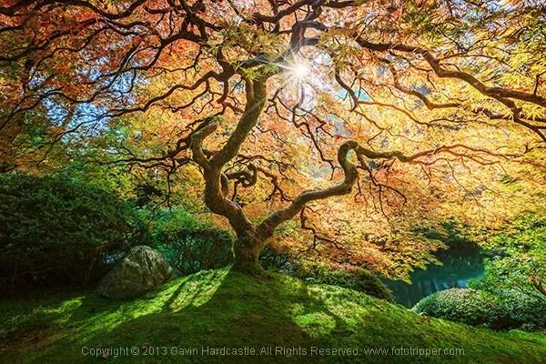 How to Photograph Trees - Gavin Hardcastle