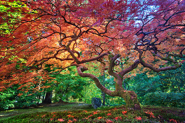 How to photograph trees in landscape photgraphy
