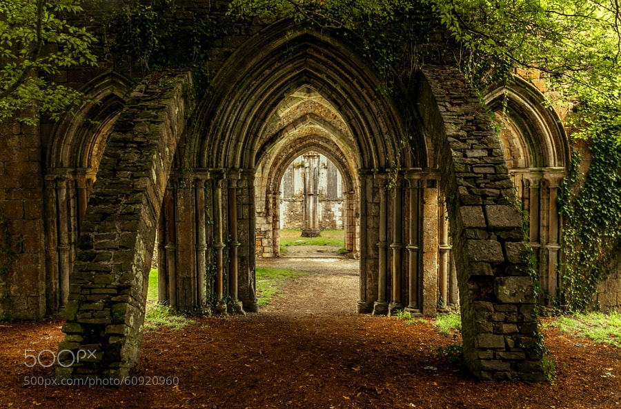 Photograph Margam Abbey Ruins by Linda Bullock on 500px