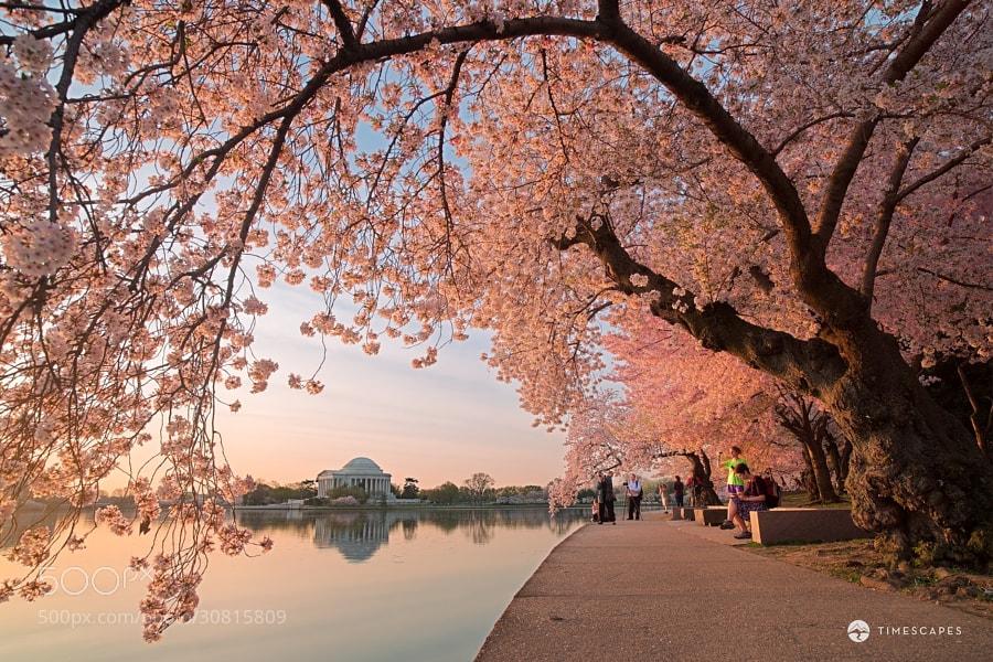 Photograph Spring Awakening by Bernard Chen on 500px