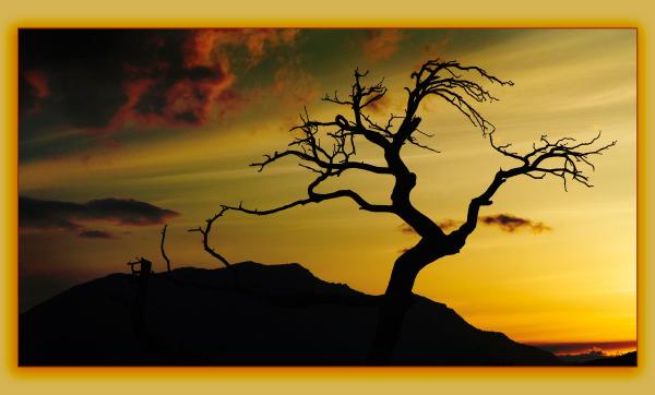 dinosuar_sunset