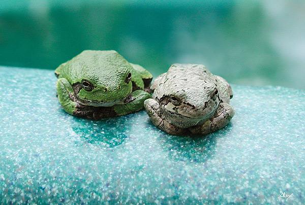 frogbuddiesW