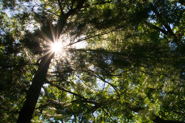 Tree starburst