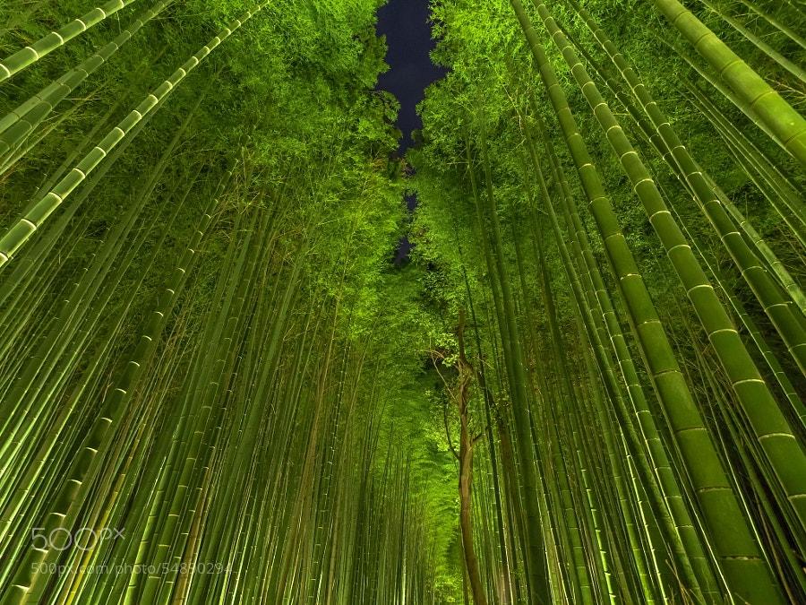 Photograph Night bamboo by Ryusuke Komori on 500px