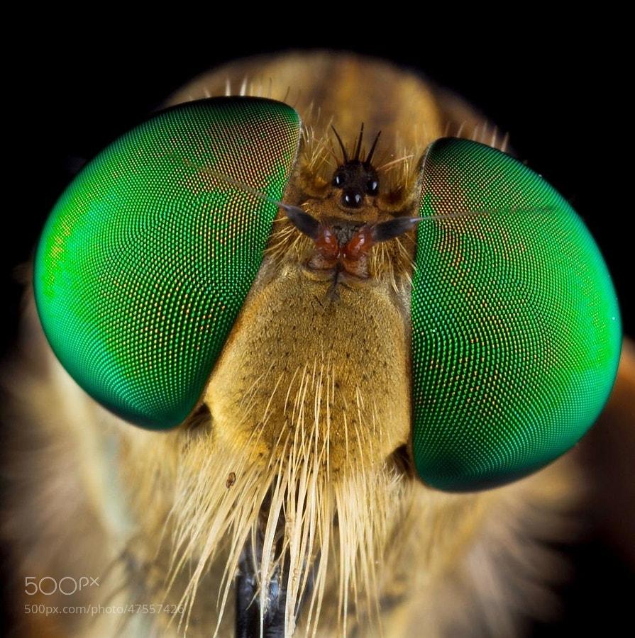 Photograph My Greeny Eyes..... by Vincent Budi Darmawan Sinaga on 500px