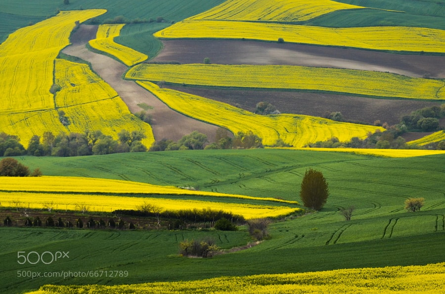 Photograph Canola by Yusuf YAMAN on 500px