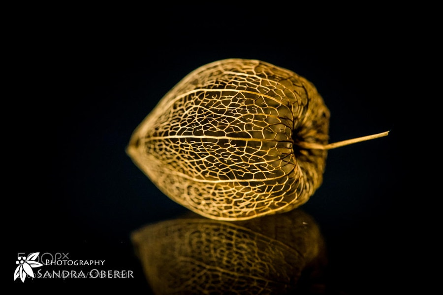 Photograph golden nugget by Sandra Oberer on 500px