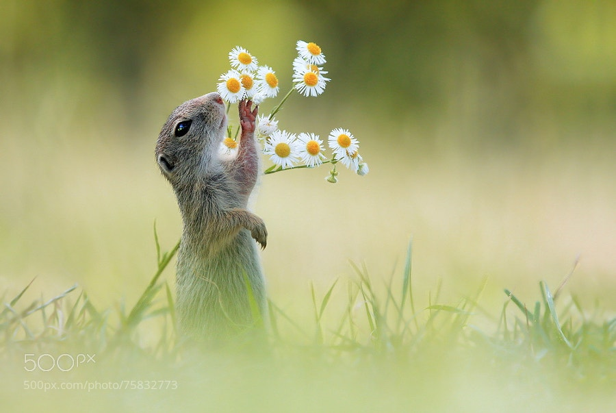 Photograph Let me have a Smell first by Julian Rad on 500px