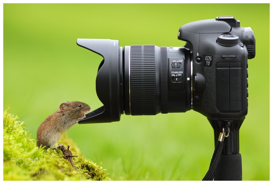 Photograph Surprise! by Simon Roy on 500px
