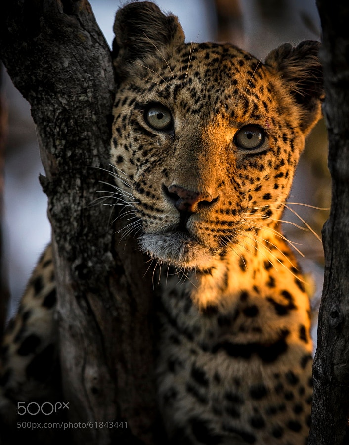 Photograph Beauty by Chris Fischer on 500px