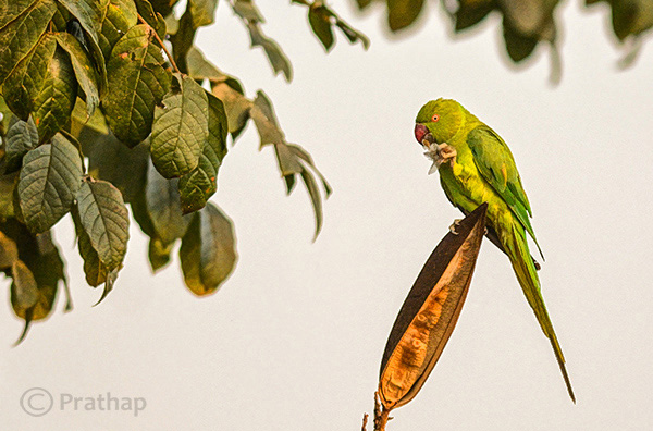 3 Nature Photography Simplified Bird Photography Post Processing Tips High Local Contrast