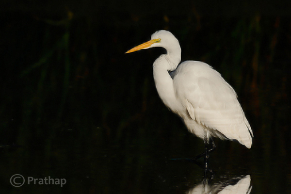 7 Nature Photography Simplified Bird Photography Post Processing Tips Waxing