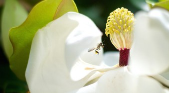 4 Tips for Photographing Bugs and Insects