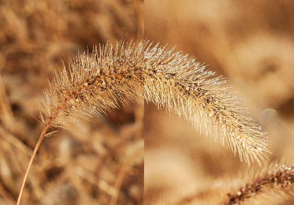 Getting the right DOF for your shot can make the difference