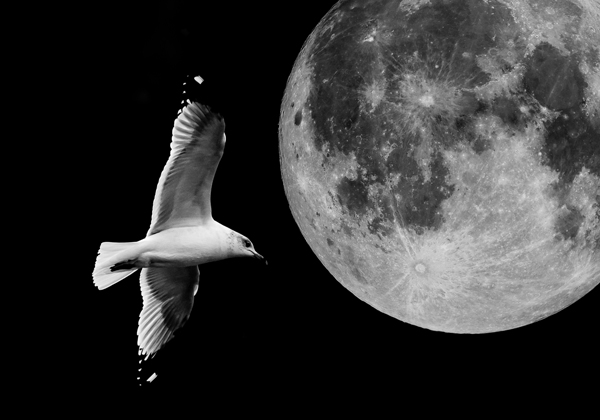 the moon and a flying seagull