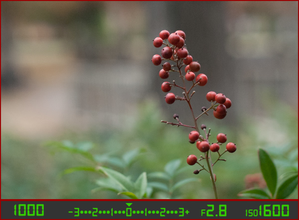 berries-correct-high-ISO