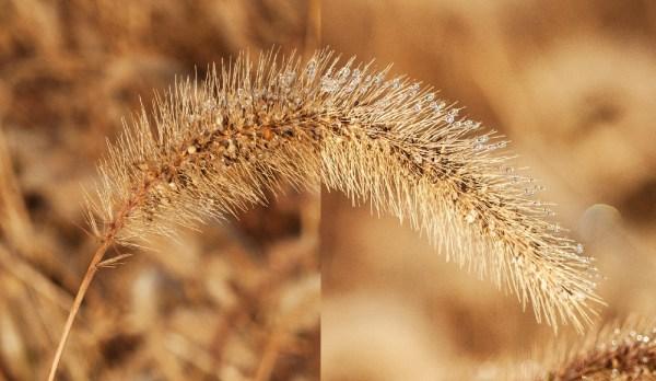 Understanding Depth of Field for Beginners