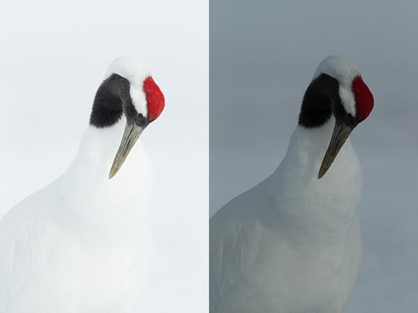 MBP Cranes Exposure Example