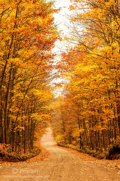 8 Beautiful Fall Foliage on the way to Agate Falls in Upper Peninsula Michigan Autumn Colors Nature Landscape Wildlife Bird Photography by Prathap