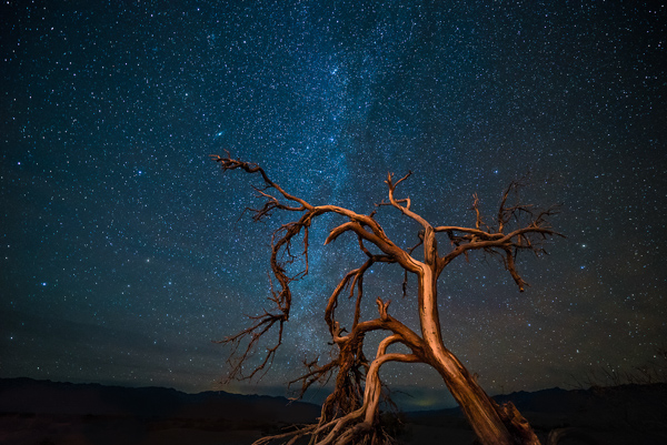 An ages old mesquite tree looking up at one of the darkest rated night skies in America.