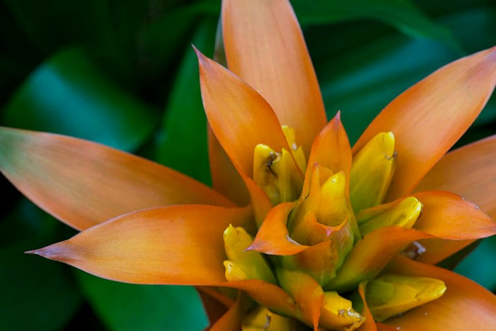 1-fitzroy-gardens-succulent-marco-original