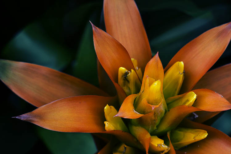 2-fitzroy-gardens-succulent-marco-fineart