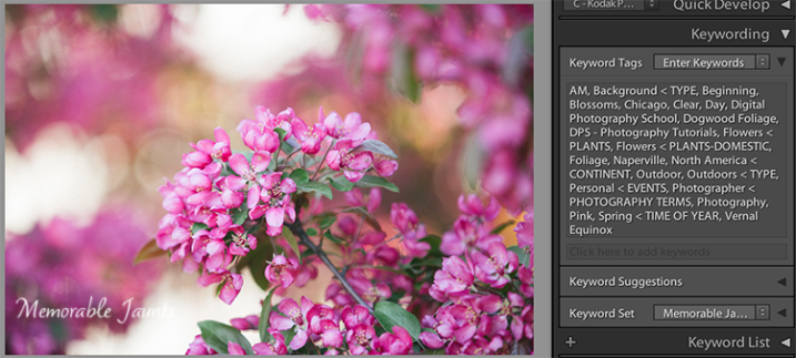 Descriptive and Specific Keywords assigned to an image in Lightroom