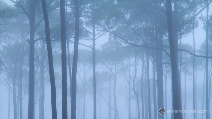 Foggy trees by Anne McKinnell