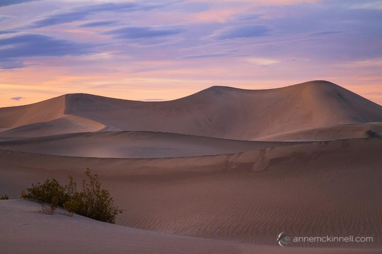 Mesquite Sand Dunes by Anne McKinnell