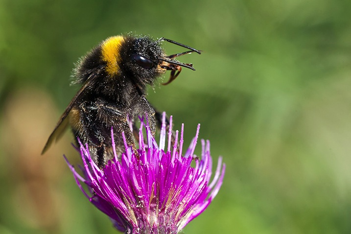 Pollencoveredbee750