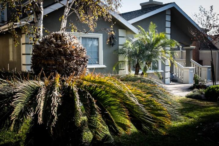 Front Yard, Burbank, California