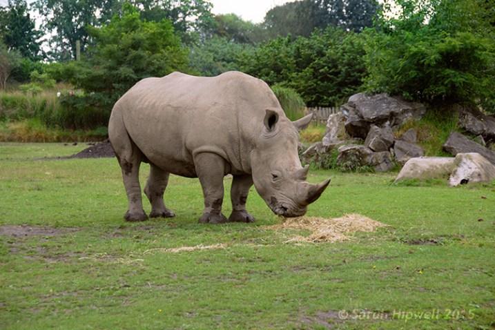 Rhino-correct-exposure