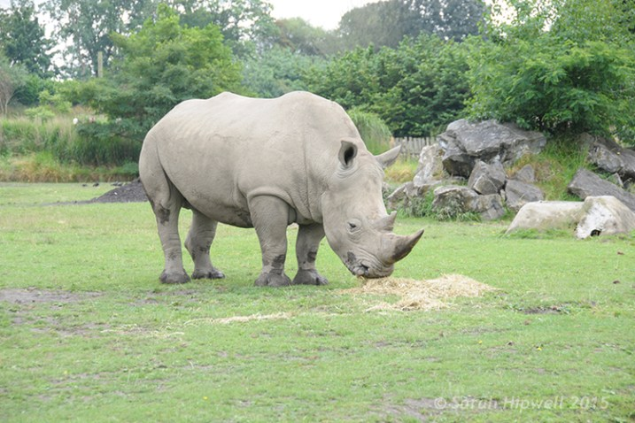 Rhino-underexposed
