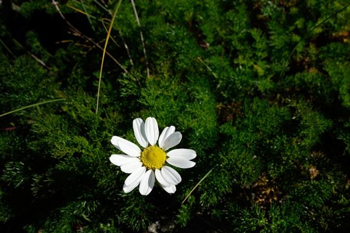 flower-underexposed