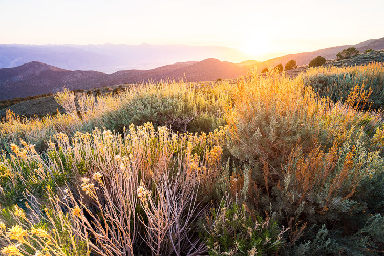 Four-image focus stack of sunset in Bishop, California. The foliage in the foreground was just inches away from the camera.