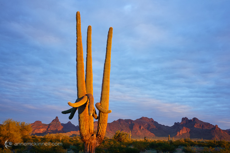 Organ Pipe National Monument, Arizona, by Anne McKinnell
