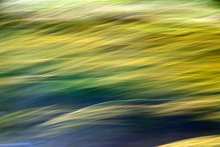 river weeds ICM