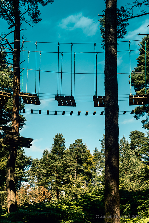 Activity-park-in-forest