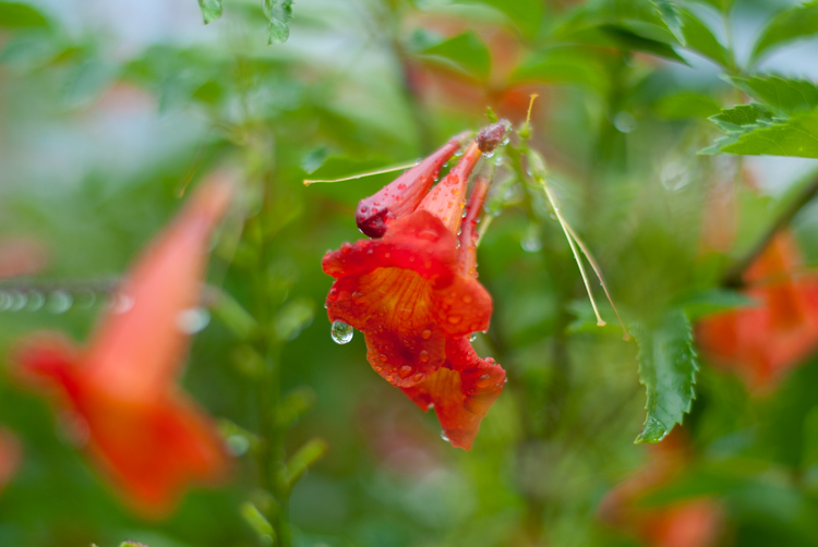 3 Tips for Taking Photos of Flowers
