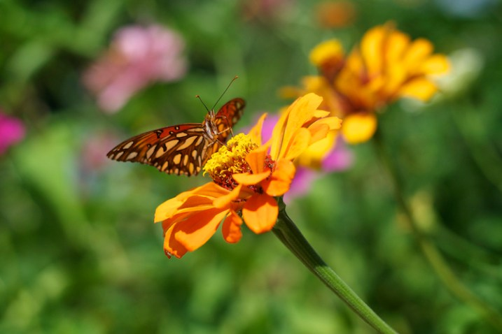 3-tips-flower-photos-insects-butterfly