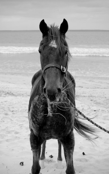 Equine-photography-4