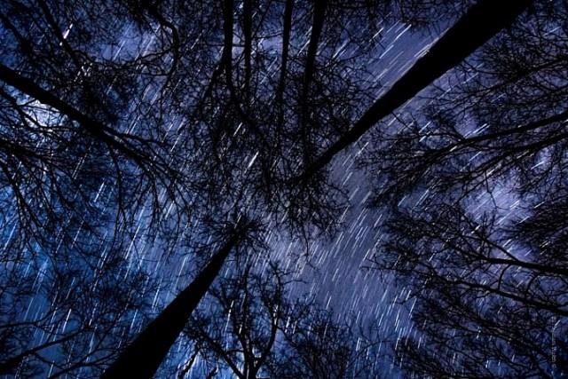 Startrail Trees