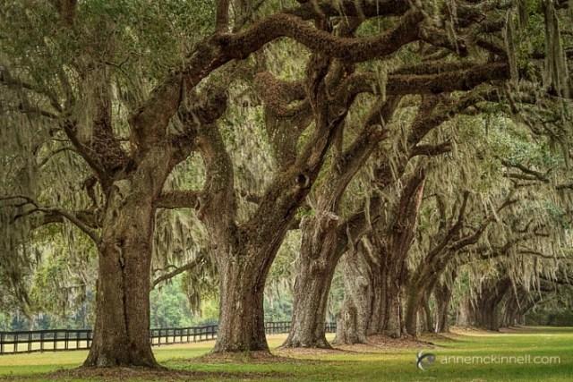 Boone Hall Plantation, South Carolina, by Anne McKinnelll