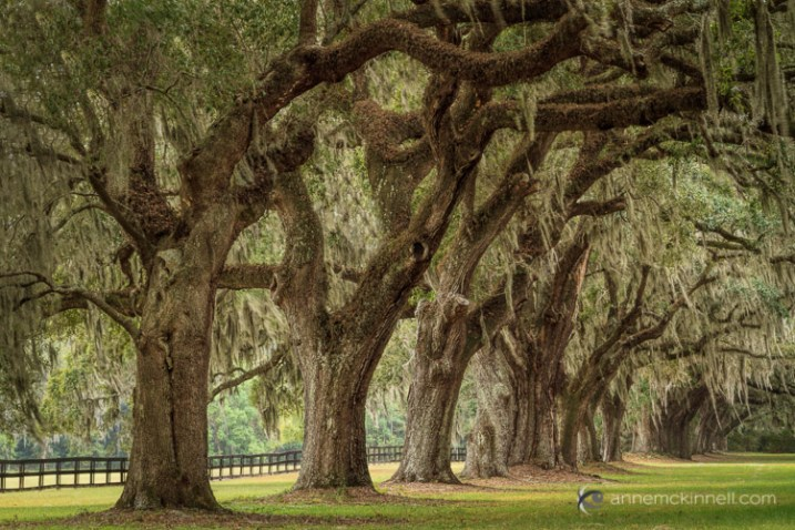 Boone Hall Plantation, South Carolina, by Anne McKinnelll