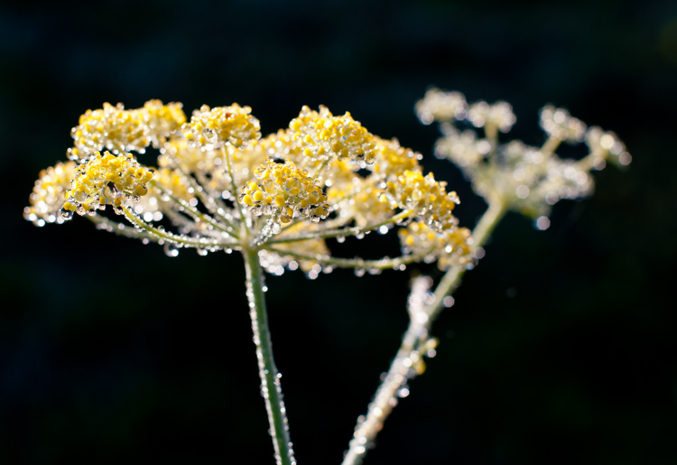 raindrops on yellow flowers