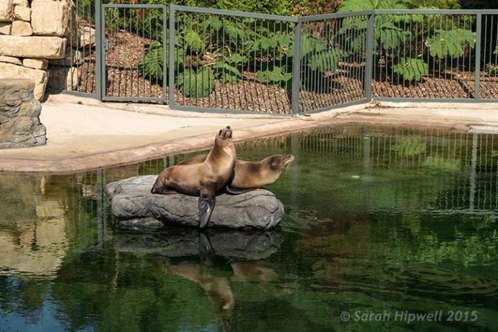 seals-at-the-zoo