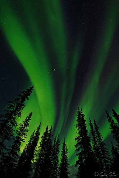Grant Collier Northern Lights 3