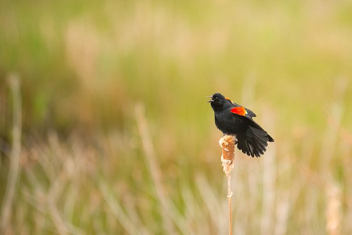 Image4 Bird